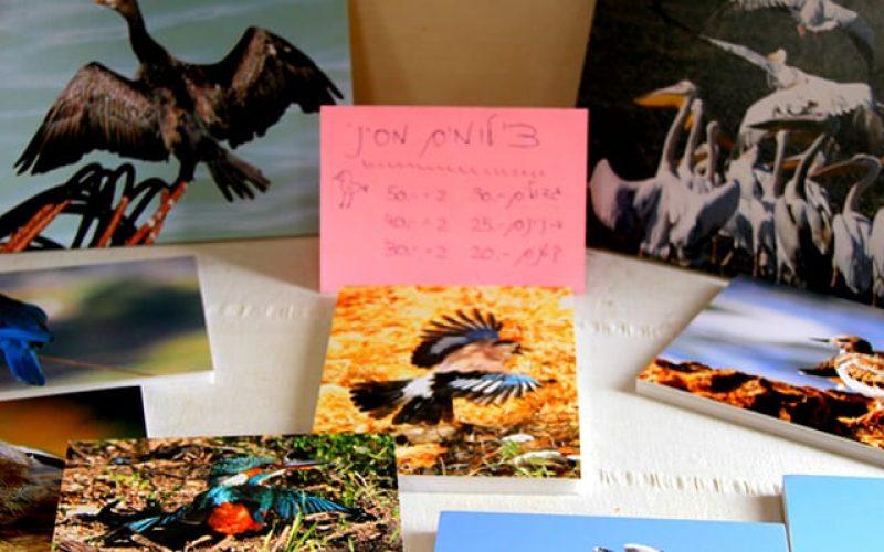 צילומי ציפורים- תוצרת כליל - חנות מקומית